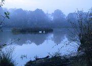 IOW Pond