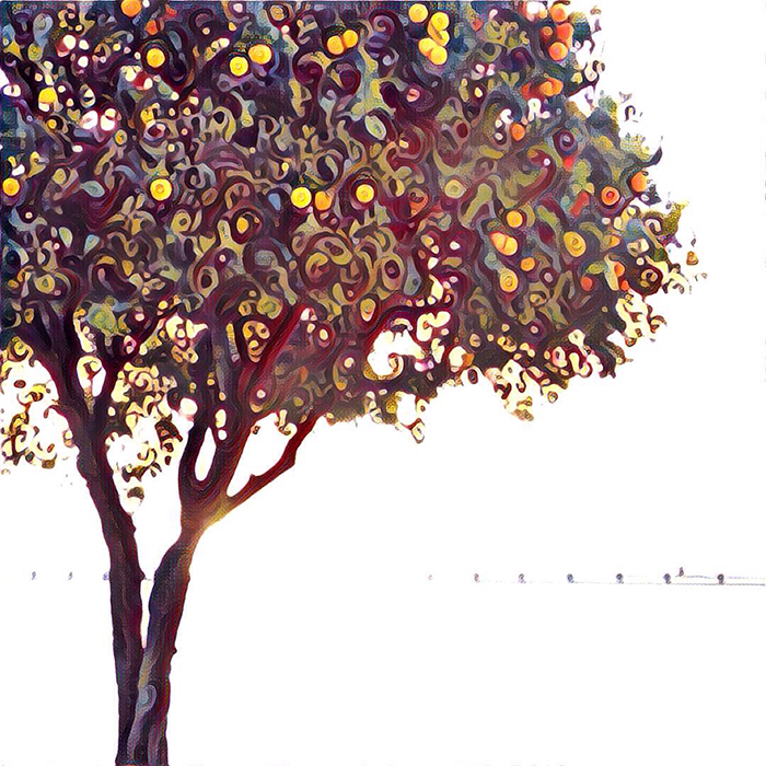 lisbon-orange-tree_web