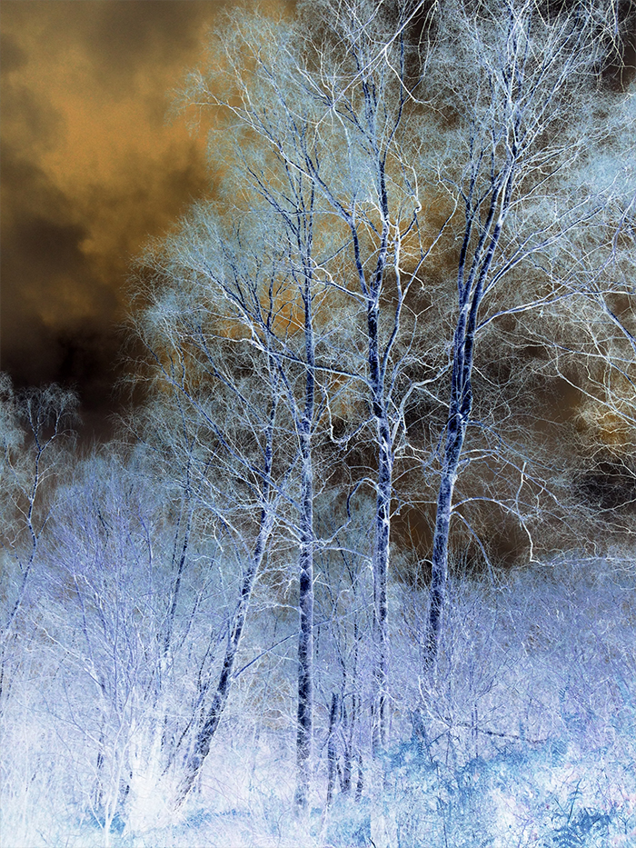 silver-birches_web